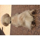 Passeadores de Cachorro preciso contratar no Bangú