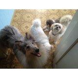 Passeadores de Cachorro quanto custa no Alto Santo André