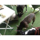 Passeadores de Cachorros com valor bom no Parque São Jorge