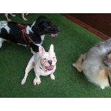 Passeadores de Cachorros valor no Jardim Flórida