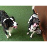 Passeadores de Cachorros valores na Chácara Flora