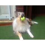 Preço Adestradores de Cães na Barra Funda