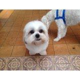 Preço Adestramento de Cães no Conjunto Promorar Vila Maria