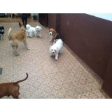 Preço Adestramentos de Cachorro no Real Parque