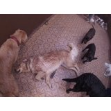 Preço Day Care Canino na Vila Clara