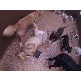 Preço de Day Care Canino na Vila Bélgica