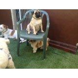 Preço de Hospedagem Canina no Parque Gerassi