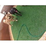Preço de Serviço de Daycare Canino na Vila Deodoro