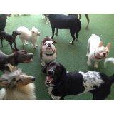 Preço de Serviço de Passeador de Cães na Várzea da Barra Funda