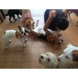 Preço de uma Hospedagem Canina na Vila Susana