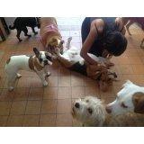 Preço de uma Hospedagem Canina no Parque Oratório