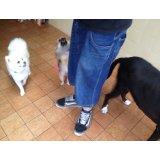 Preço do Adestramento de Cães no Taboão