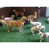 Preço Hotel para Cães na Vila Babilônia