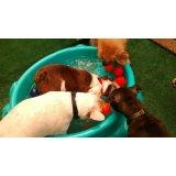 Preço Serviço de Babá de Cachorros na Vila Canero