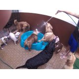 Preço Serviço de Daycare Canino na Vila Ipê