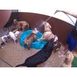 Preço Serviço de Daycare Canino no Parque Novo Mundo