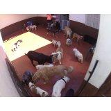Preço Serviços de Daycare Canino na Vila Guaraciaba