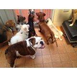 Preços Adestramentos de Cachorro no Jardim São Bento