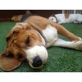 Preços de Hospedagem Canina na Independência