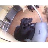 Preços de Serviço de Daycare Canino na Casa Grande