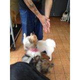 Preços do Adestramento de Cães no Centro
