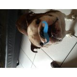 Preços dos Passeadores de Cachorro na Cidade Domitila