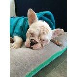 Preços Hospedagem Canina no Parque Erasmo Assunção