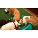Preços Serviço de Babá de Cachorros na Vila Vermelha