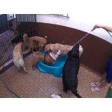 Preços Serviço de Daycare Canino no Jardim Guarará