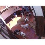 Preços Serviços de Daycare Canino no Centro