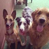 Qanto custa um Dog Walker na Vila Assunção