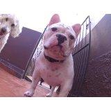 Quanto custa em média Serviços de Daycare Canino em Ferrazópolis