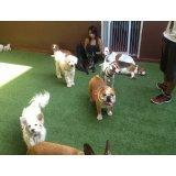 Quanto custa Hotéis para Cães no Jardim Maria Emília