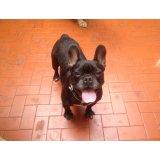 Quanto custa um Serviço Dog Sitter no Jardim Natália