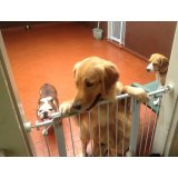 Quero contratar Serviço Dog Sitter na Vila Santa Clara