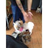Serviço de Adestrador de Cachorro preço no Jardim Guanabara
