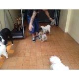 Serviço de Adestrador de Cachorro preços no Jardim Vitória Régia