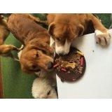 Serviço de Adestrador de Cachorro valor no Jardim Cotching