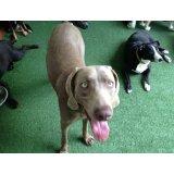 Serviço de Adestrador de Cachorros na Vila Santo Estéfano