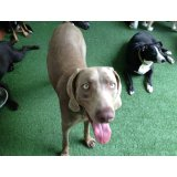 Serviço de Adestrador de Cachorros na Vila Susana