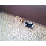 Serviço de Adestrador de Cachorros no Centro Industrial Jaguaré