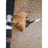 Serviço de Adestrador de Cachorros valor na Vila Elisio