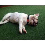 Serviço de Adestrador de Cães contratar no Demarchi