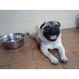 Serviço de Adestrador de Cães preço na Vila Cordeiro