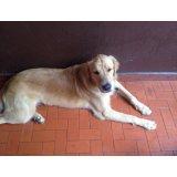 Serviço de Adestrador de Cães quanto custa no Jardim Ademar