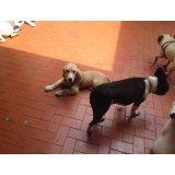Serviço de Adestrador de Cães quero contratar na Bairro Campestre