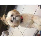 Serviço de Adestrador de Cães valor na Vila Vivaldi