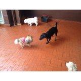 Serviço de Adestrador de Cães valores na Vila Floresta
