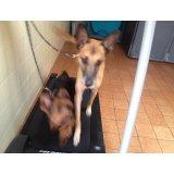 Serviço de Adestramento de Cães