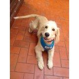 Serviço de Adestramentos de Cachorro Filhote no Parque Oratório